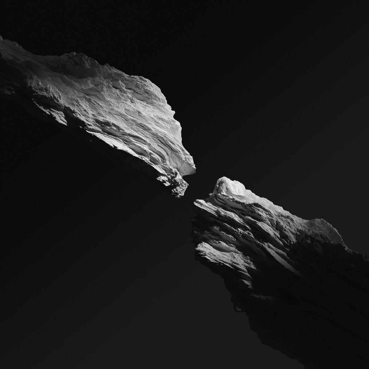 Kinkajous | Being Waves